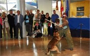 La Diada de la Policía Local contó con una demostración de la tarea que realiza la Unidad Canina K-9 | Xavier pi/ACN